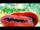 Индийские фрукты Папайя маракуйя гуава Что купить из фруктов в Гоа