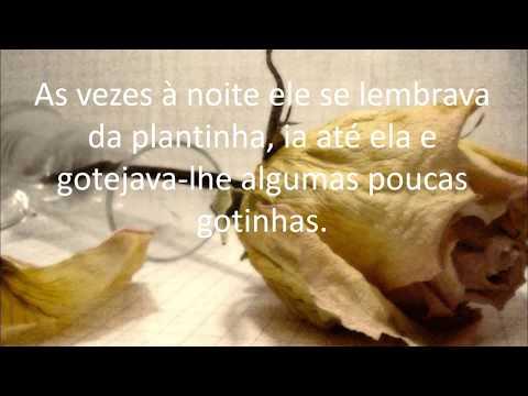 A PLANTA DO VIZINHO