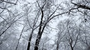 Canon 5D 24 105mm Lens Snow Footage