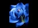 Doc293910236_470220471.mp4