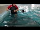 американский кокер спаниель в бассейне NEVA