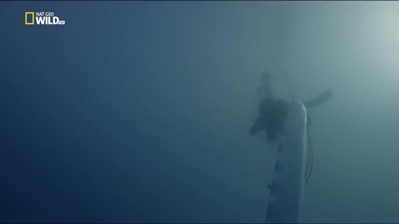 Nat Geo Wild: Огромный морской змей