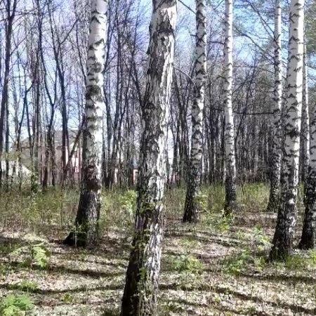 Svetlana_umm_jannat video