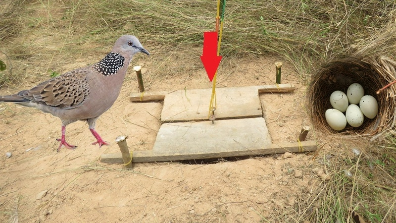 Awesome Quick Bird Trap Using Bird Nest - How To Trap Bird That Works 100%