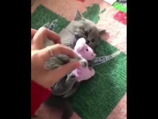 Grumpy-pussy-cat.mp4