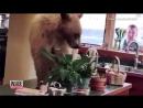 California Man Finds Bear Enjoying a Soak in His Hot Tub