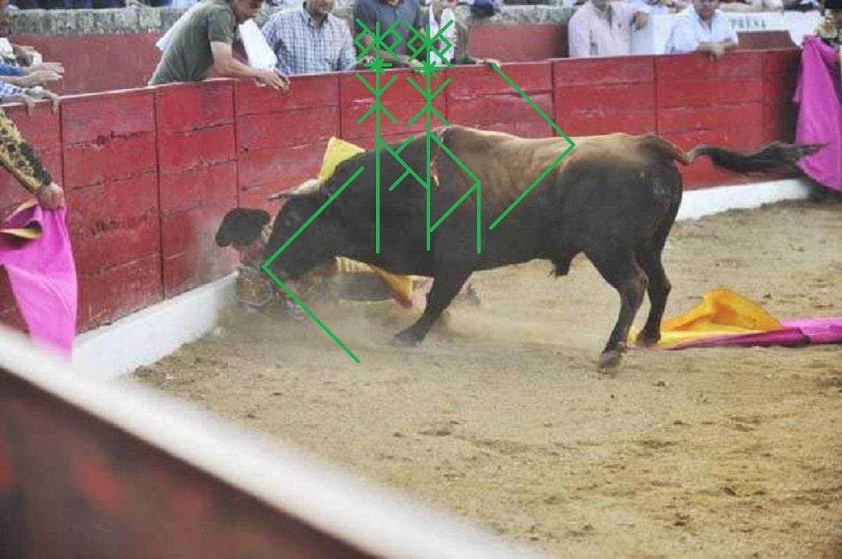 Бешеный бык из серии Разбиватель морды PDB8SLy2238