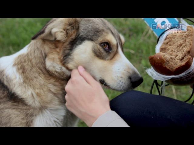 «Жалко, но придется отстреливать»: анапчанка о бездомных собаках
