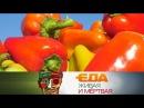 Еда живая и мёртвая какой перец лучше, все о зефире и пять полезных добавок к пище 20.01.2018