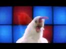 куриный танец