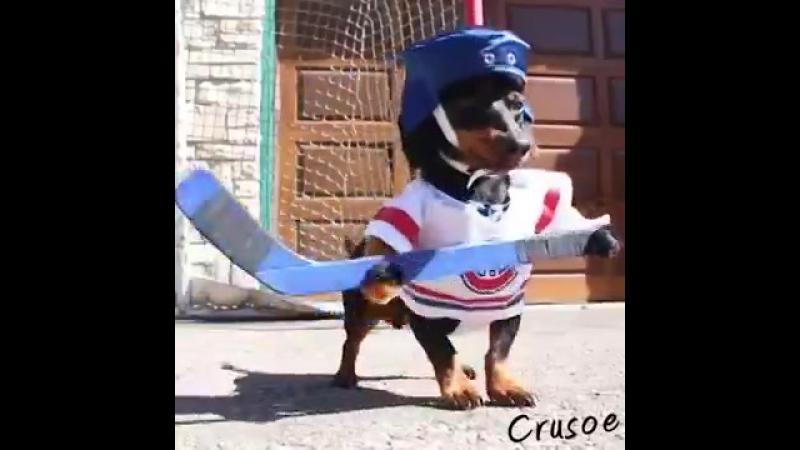 Crusoe Oakley Dachshund Play Ball Hockey