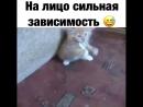 Бешеный кот 4