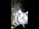 моя кошка с Донецка