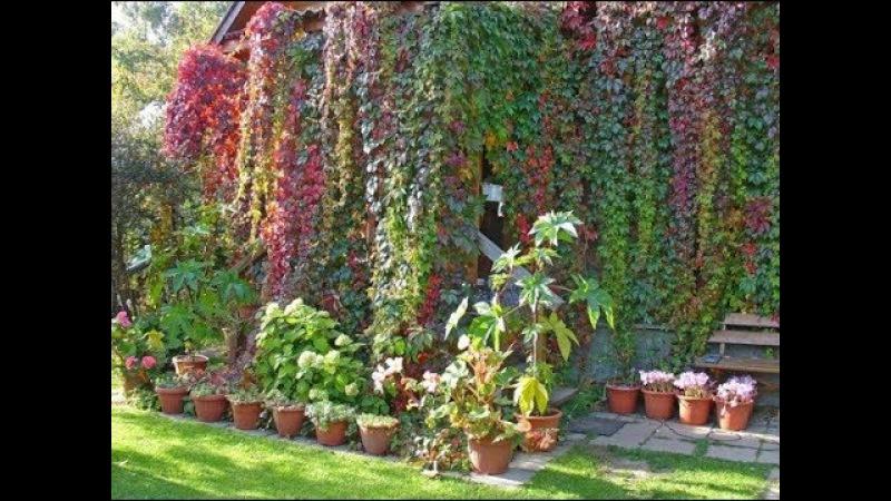 10 растений которые надо сажать возле беседки