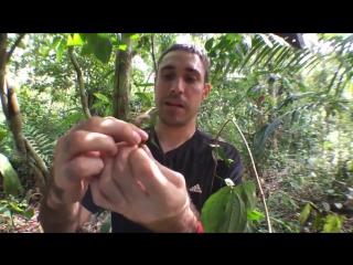 Гусеница, которая становится змеёй, когда боится