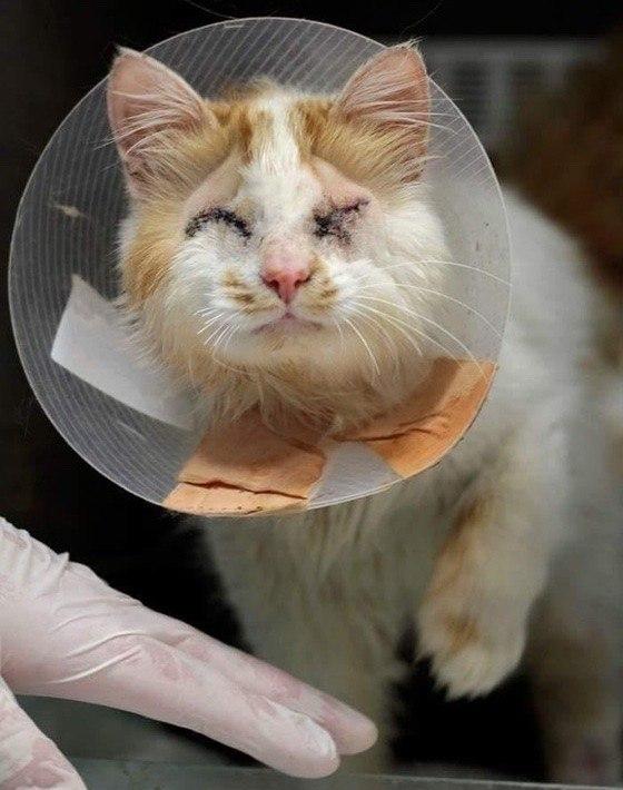 История кота Мартина. Как найти себе друга