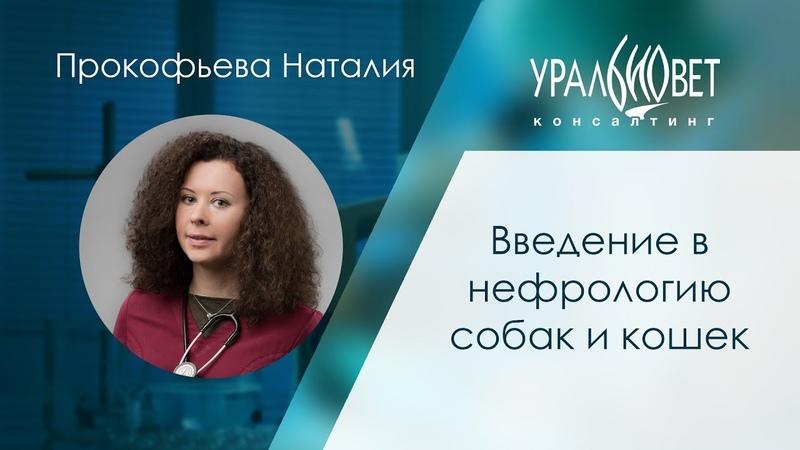 Введение в нефрологию собак и кошек Прокофьева Наталия убвк нефрология