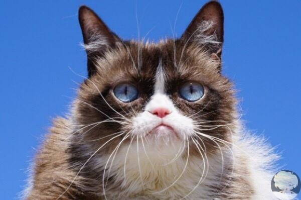 Умерла знаменитая сердитая кошка Grumpy Cat