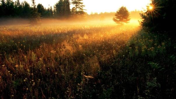 А летом счастье пахло солнцем. Сумасшедшим солнцем, прорывавшимся сквозь шальную листву деревьев и самые тёмные стёкла стильных очков.Обжигающим солнцем, которое искусно прятало свою страсть по