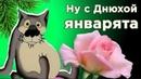 С Днем рождения в НОЯБРЕ! Смешное поздравление от ВОЛКА. Мирпоздравлений