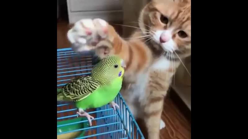 папугай и кот