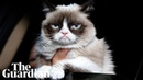 Grumpy Cat Internet's most famous cat dies aged seven