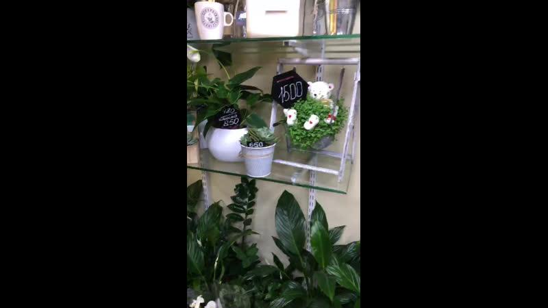 Прекрасные новинки комнатных цветов 🥰 Не пропустите!