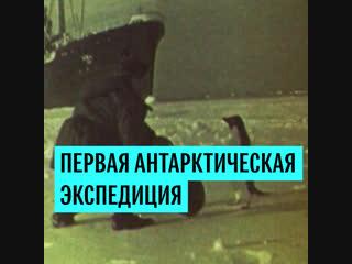Советская экспедиция высадилась в Антарктиде 63 года назад