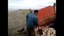 Платошкин: геноцид рыбы на Дальнем Востоке идёт полным ходом, а правительству Медведева все равно