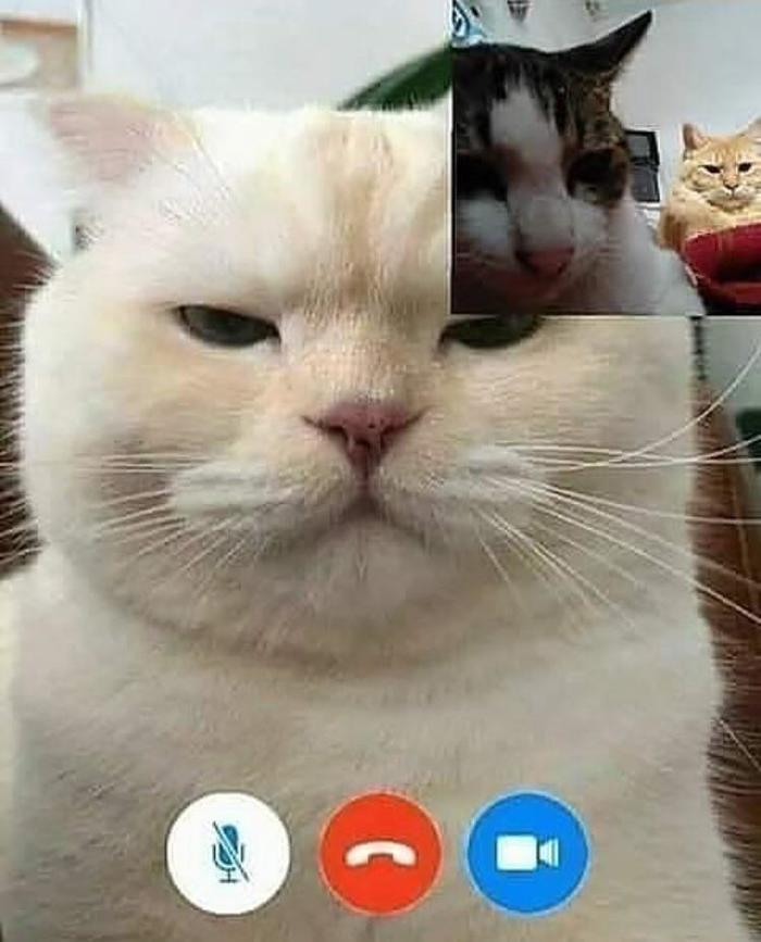 когда звонишь предкам по скайпу
