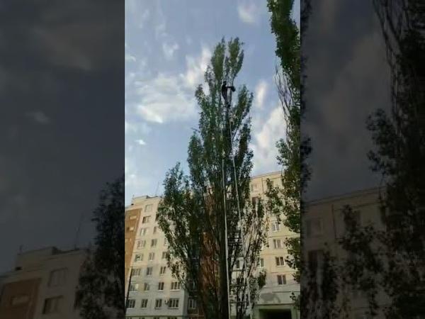 В Казани молодой человек более 10 часов не поддается на уговоры слезть с дерева во дворе дома
