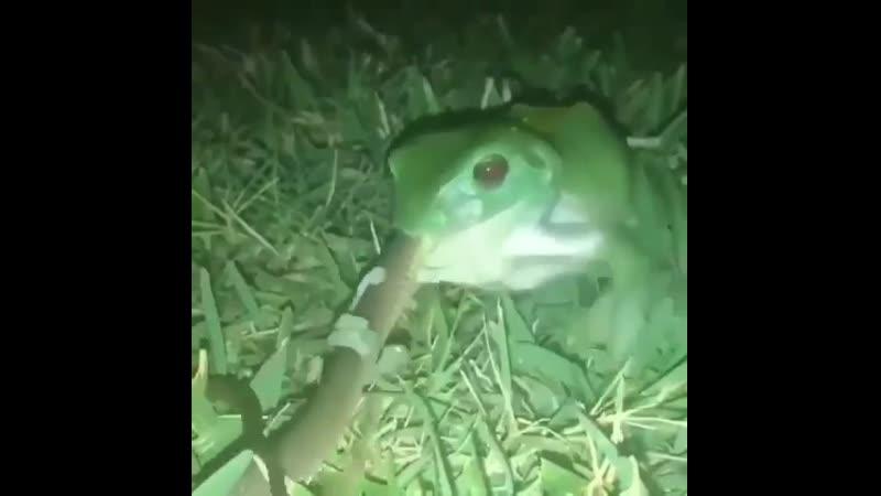 Лягушка vs. змея. Группа Выжить Любой Ценой