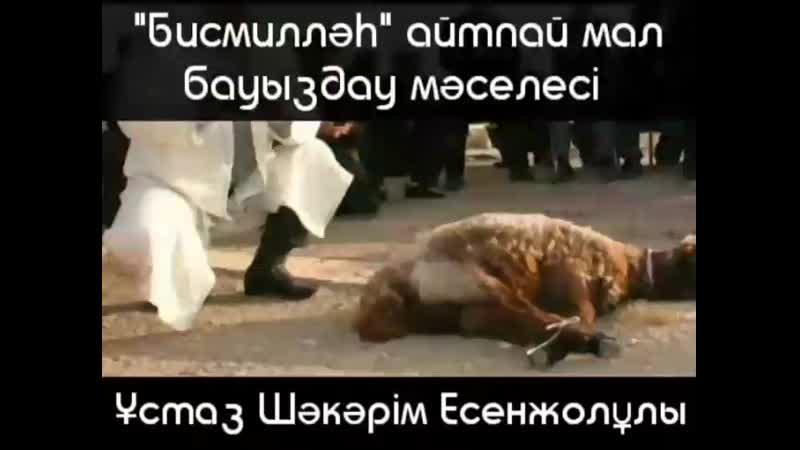Бисмилләһ айтпай мал бауыздаса ет адал ма  🎙️Ұстаз Шәкәрім Есенжолұлы хафизаһуллаһ