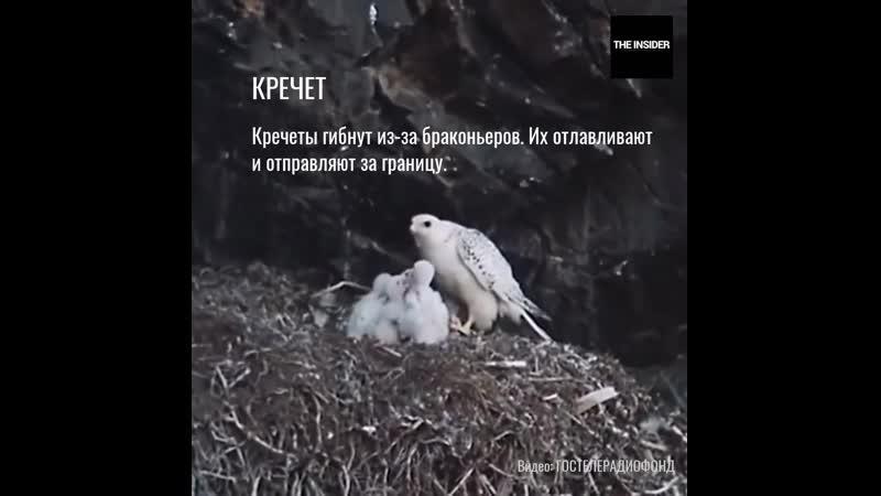 6 вымирающих видов животных в России