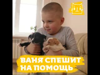 6-летний Ваня из Владикавказа спасает бездомных животных