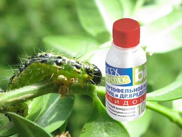 Лепидоцид  эффективный препарат против листогрызущих вредителей
