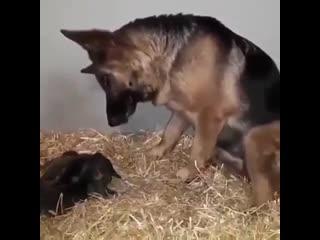 Мама и малыши - милота -
