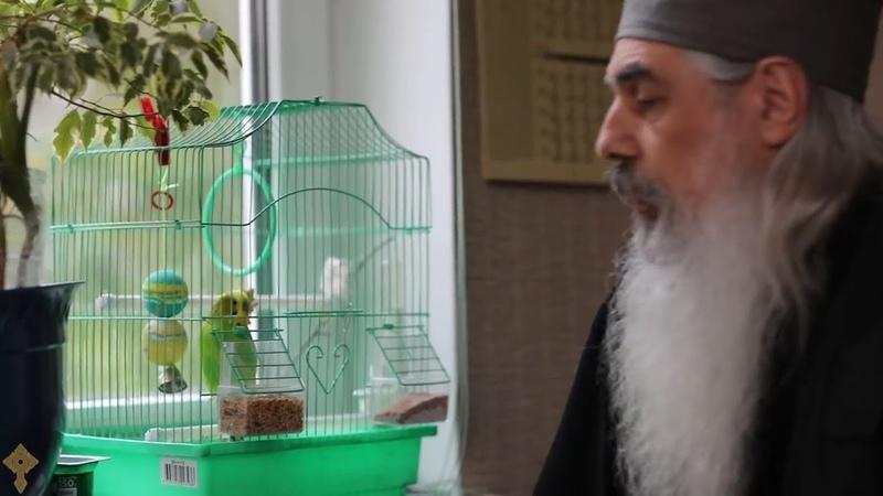Живущий в Валаамском монастыре попугай научился молиться