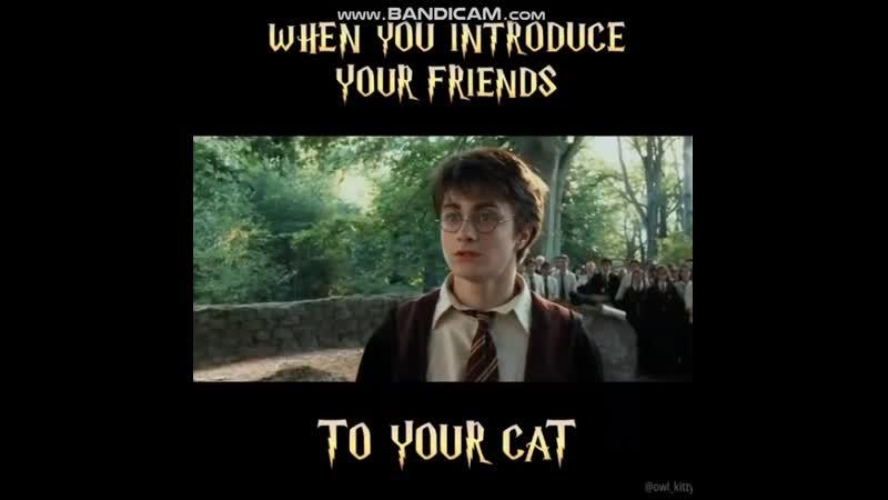 Гарри Поттер и Черный Кот