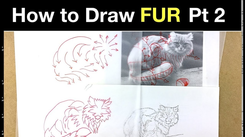 How to Draw Fur Pt 2 Cat fur exercise