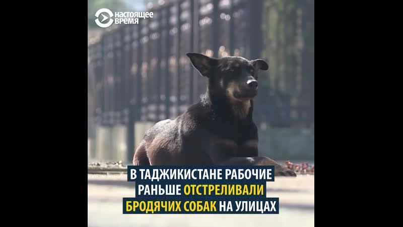 Как приходится бродячим животным в странах Центральной Азии
