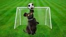 Котенок приносит игрушку как собака • Смешные коты и кошки / Смешные животные / SANI vlog