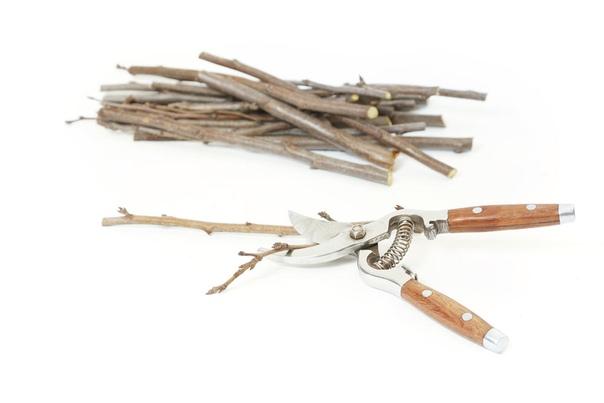 Когда и как заготавливают черенки Как правило, черенки для привоя с последующим хранением заготавливают в течение года дважды: в конце осени (начале зимы) и в конце зимы (ранней весной). Осенью