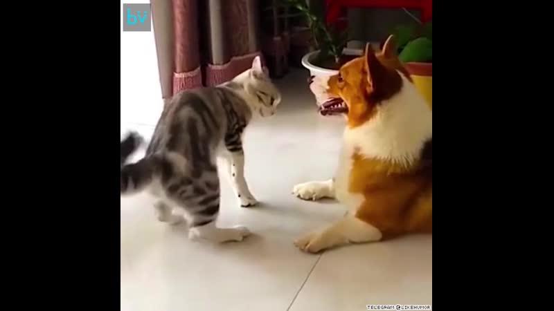 Это предупреждение, пёс!