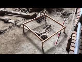 Гигантскии человеческии скелет, наиденныи в пещере Као Кханап Нам в Таиланде