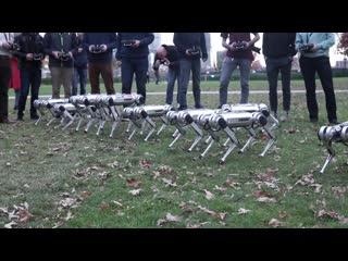 Роботы-собаки MIT играют в футбол и синхронно делают сальто