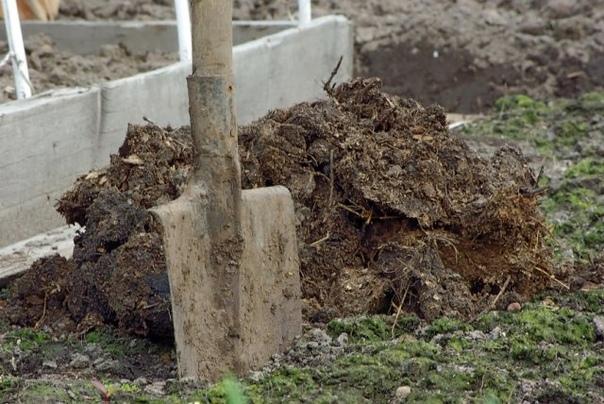 Как понять, что почва на огороде устала, и как ей помочь Урожаи с каждым годом радуют вас все меньше, хотя вы делаете все так же, как и раньше Деревья растут очень медленно, а цветы постоянно