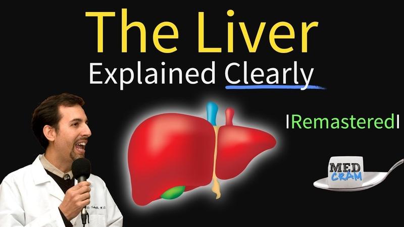 Liver Explained Function Pathology Diseases Cirrhosis