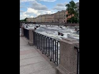 Гидробайкеры открыли сезон в Петербурге