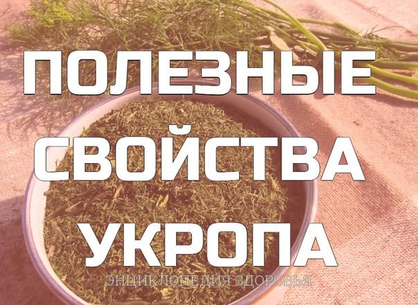 Чтобы забыть о давлении нужно взять горсть семян укропа
